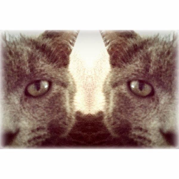 Salut je reviens pour vous montrer mon petit chat : ismo c'est bizarre je sais mais j'aime ça :)