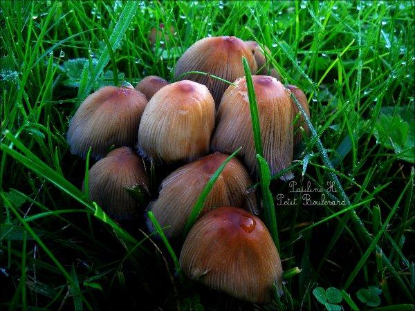 La saison des champignons !