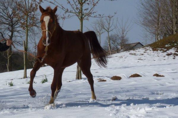 Photos de cet hiver sous la neige.