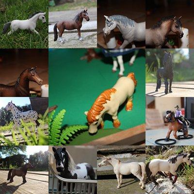Présentation  de quelques chevaux