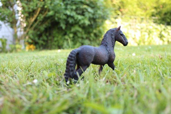 Aujourd'hui les chevaux ont été sortie en pâture ...