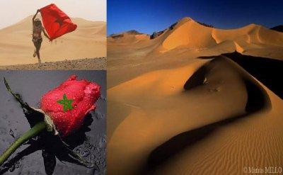 الصحراء للمغرب فقط