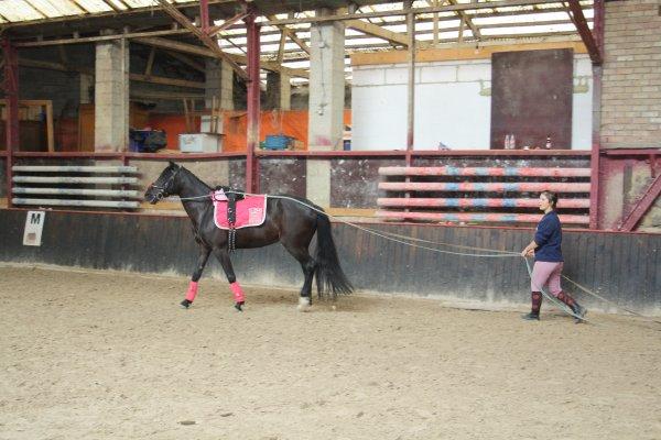 ; Pour parler à un cheval, il n'y a pas besoin de mots. C'est une étreinte charnelle qui alimente nos rêves.