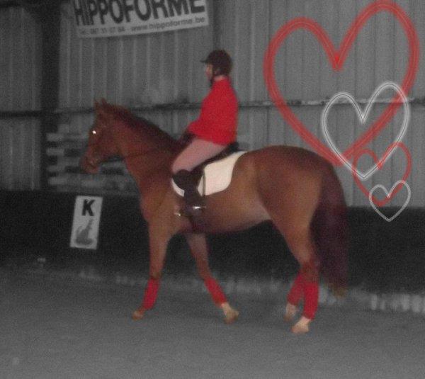 """. """" On ne peut prétendre maitriser un cheval tant qu'on ne se maitrise pas soit-même. Il n'y a pas de meilleurs maitres que les chevaux pour apprendre à contrôler vos émotions """" ."""