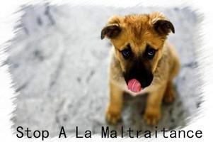 Stop a L'hippophagie
