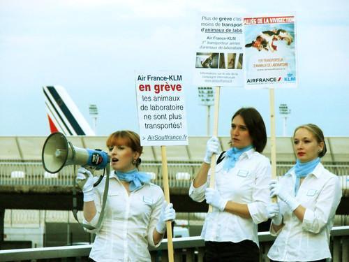 Air Souffrance demande à Air France de stopper le transport des animaux pour les laboratoires