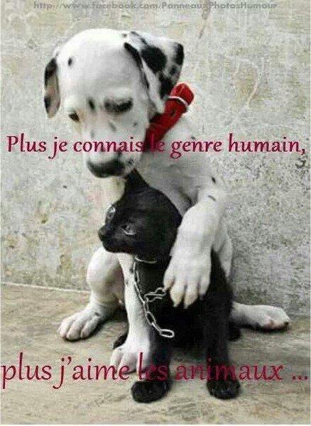 Beaucoup de gens prennent les animaux pour des objets, alors que c'est un être vivant ! Si vous pouvez pas subsvenir à leurs besoins, acheter une peluche MERDE !!