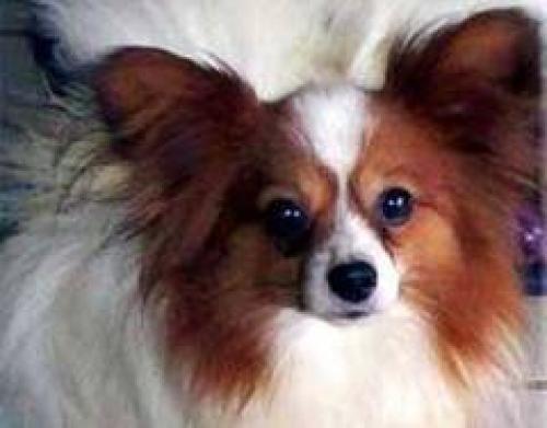 Prison avec sursis pour avoir étranglé son chien