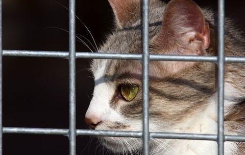 Abandons d'animaux : l'été, bête noire des refuges !