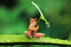 un petit coucou......sous la pluie
