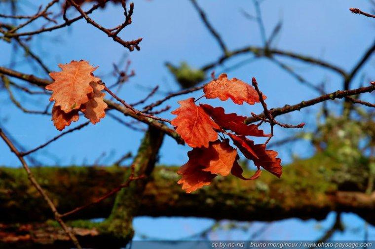 Pourquoi les feuilles deviennent ells rouges en automne?