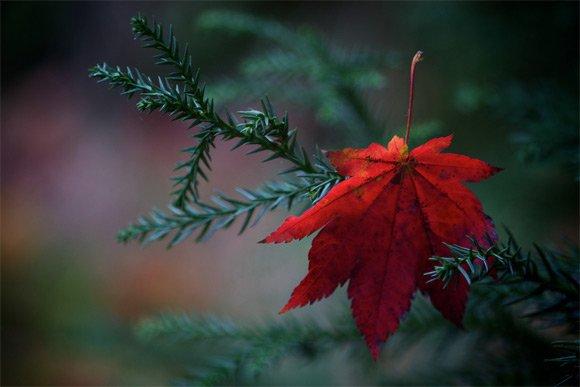 un joli poème de Guillaume Apollinaire  :L'automne est malade