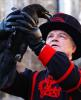 les corbeaux de Londres