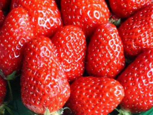 les fraises de Plougastel