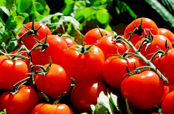revenons chez nous avec l histoire de la tomate:le fruit qu'on a failli ne jamais manger