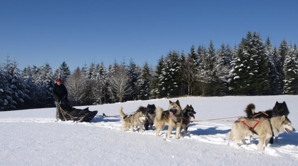 pourquoi les chiens n ont ils pas froid aux pattes?