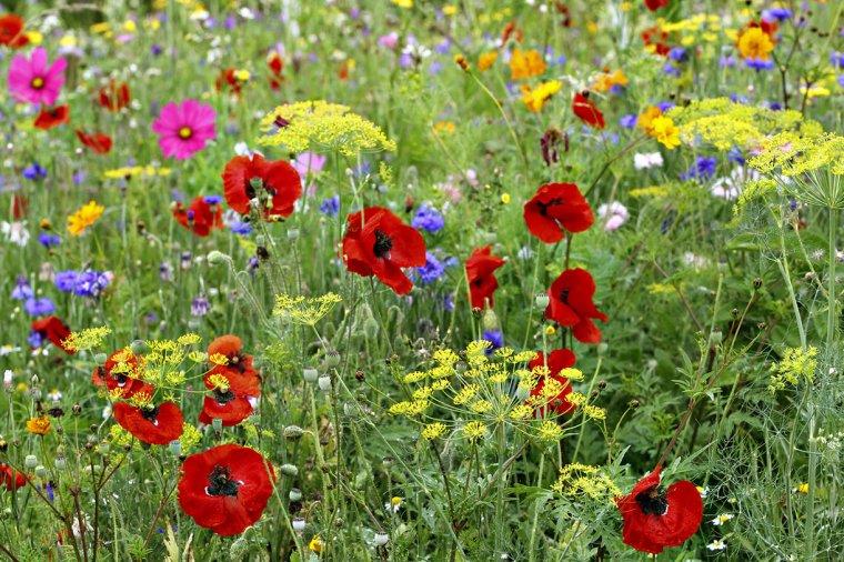ce que disent les fleurs par George Sand