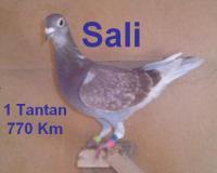 Pigeon Maroc: Présentation de Jamal Eddine CHOUBIKI