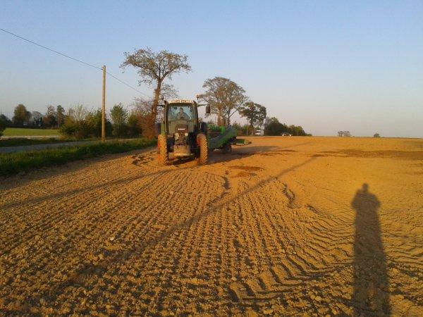 plantation Pomme de terre