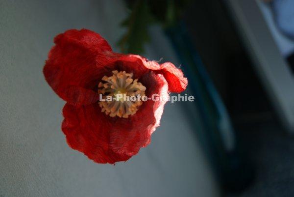 Fausse Fleurs
