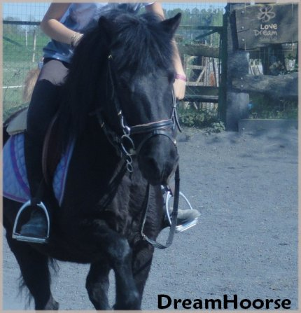 Bienvenue DreamHoorse :)