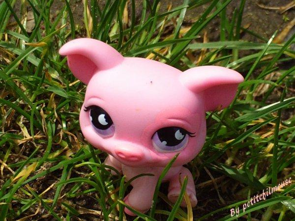 Cochon ! :3