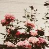REDtoxic-archive