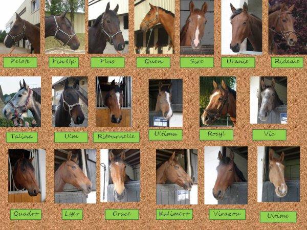 Les chevaux de la SHUC