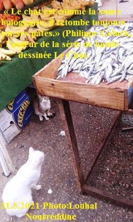 Chère ! chère la sardine!