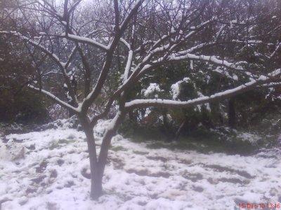 Photos souvenirs prises pendant la neige.