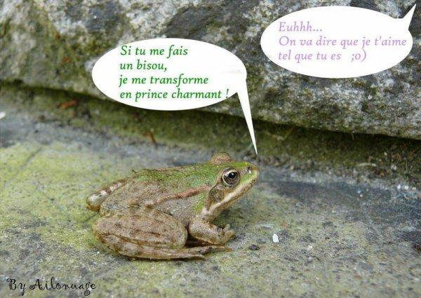 Les grenouilles.