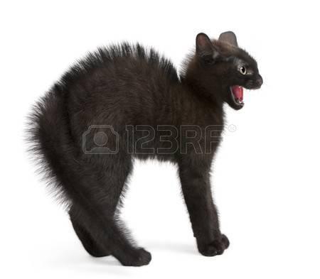 Chapitre 9: Un chat fugueur