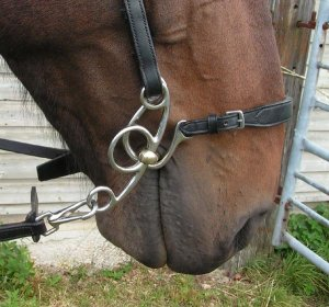 L'équitation sans mors - Page 5 3211495929_1_6_VRrUBIRg