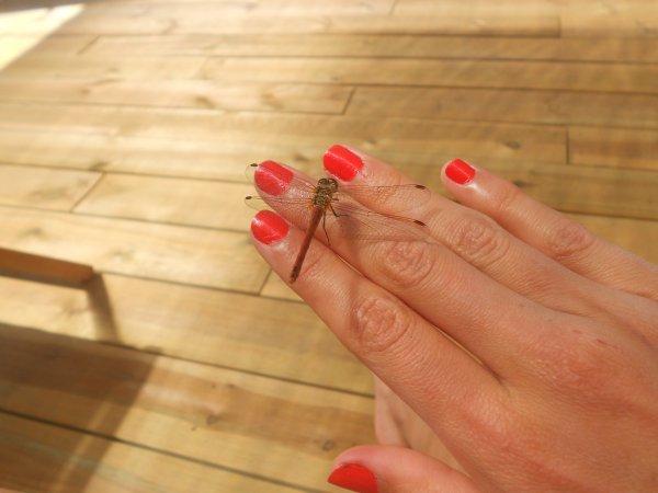 Rouge pailleté, vernis Sephora