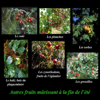 Mi-novembre : de la fleur au fruit (Flore_21)