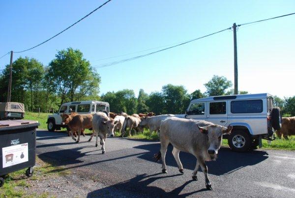 Sortie en Corrèze les 25,26,27 et 28 mai 2017