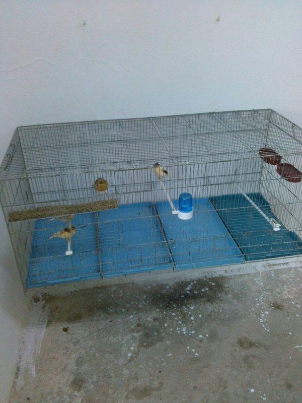 Ma nouvelle chambre d'élevage conçu pour mes canari