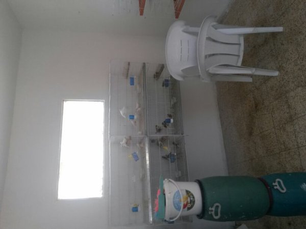 Nettoyage et réorganisation de ma chambre d'élevage