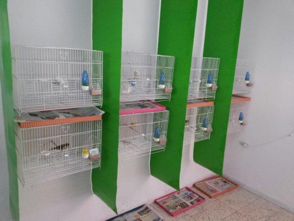 Ma chambre d'élevage avec des nouveaux rideaux