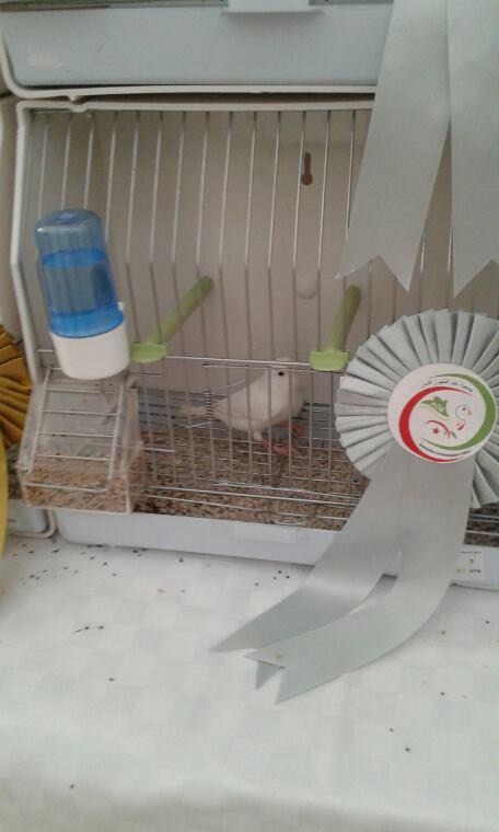 2 oiseaux engagés 2 titres 2ème et 3ème  en blanc ressecif  :)