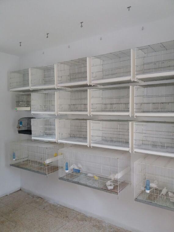 Une couche de peinture pour murs de la chambre d'élevage et l'installation des nouveaux cages