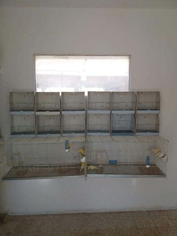 Les cages d'expo en place
