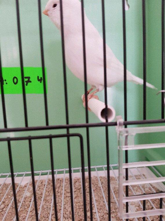 Super oiseaux dommage petite tâche au patte