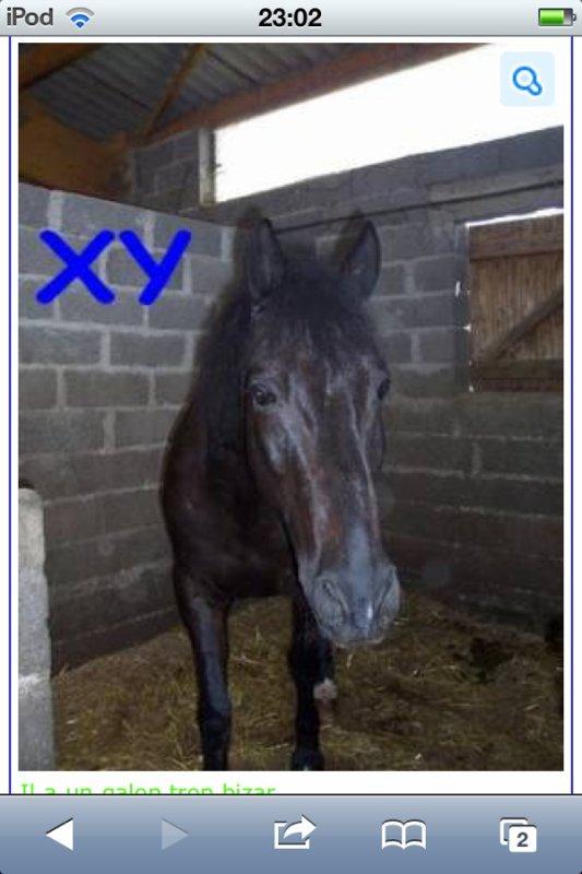 xy le cheval qui a remporté le plus de trophés dans notre club !!!!