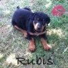 Rubis&Jade
