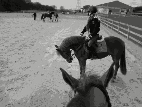 Mon poney, le seul, et l'unique