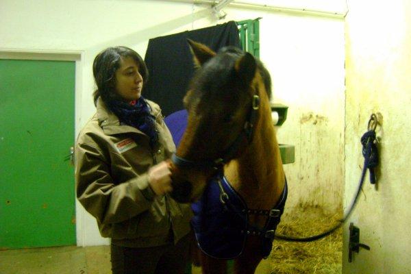 """"""" Je vois parfois dans le regard d'un cheval la beauté inhumaine d'un monde d'avant le passage de l'homme . """"   -   Bartabas .."""