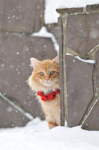 Fait d'hiver