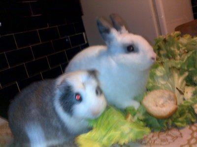 Grribouille et Bunny