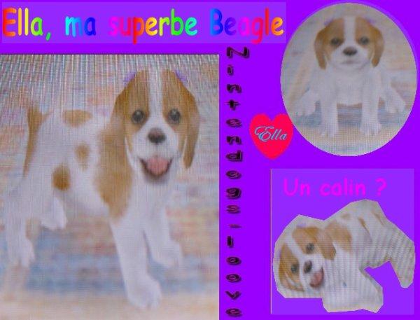 Ella : Beagle !